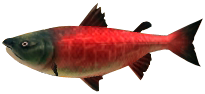File:Majora's Mask 3D Fish Postal Salmon (Swamp Fishing Hole).png
