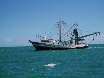 Imagefishtrawl
