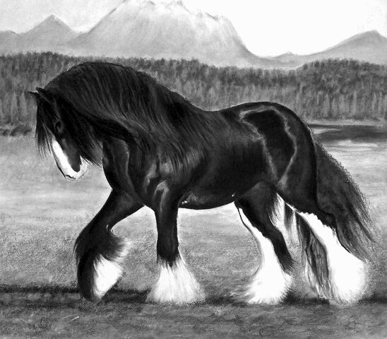 File:Shire horse.jpg