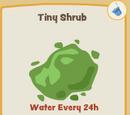 Tiny Shrub
