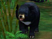Zoo Tycoon 2 Asiatic Black Bear