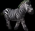 ZebraR