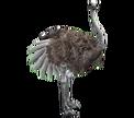 OstrichRf
