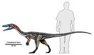 Coelophysis size