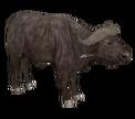 Buffalorr