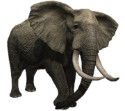 ElephantArr