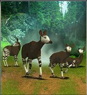 Okapi ZT