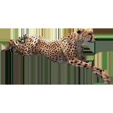 Cheetah Aurora Designs Zt2 Download Library Wiki