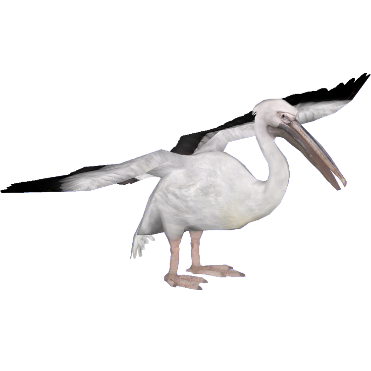White Pelican (HENDRIX) | ZT2 Download Library Wiki ...