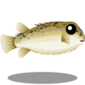 ColorfulFish Puffer Fish-icon