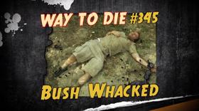 Bush Whacked