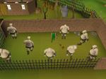 Emote clue - cheer ogre training camp