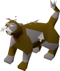 Lazy cat (white and brown) pet