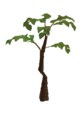 Jungle tree.png