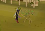 Cutting medium jungle