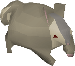 Chinchompa (Hunter)