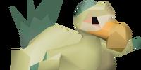 Chompy chick