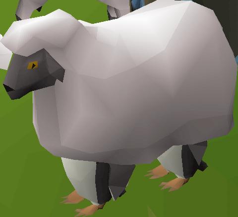 Penguin sheep