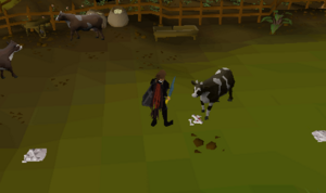 Killing cows