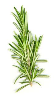 A Rosemary Stalk