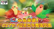 3rd & Bird CCTV Promo 2