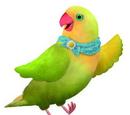 Mrs. Lovebird