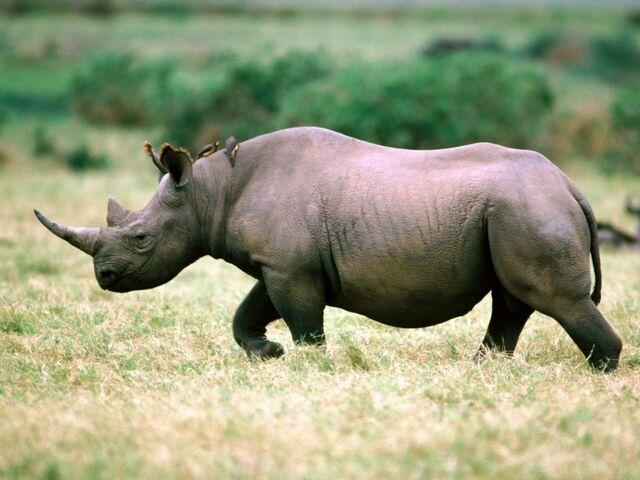 File:RhinoSabotage.jpg
