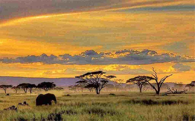 File:African-Safari-Wallpaper.jpg