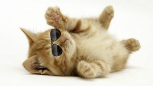 File:CatWithGlasses.jpg