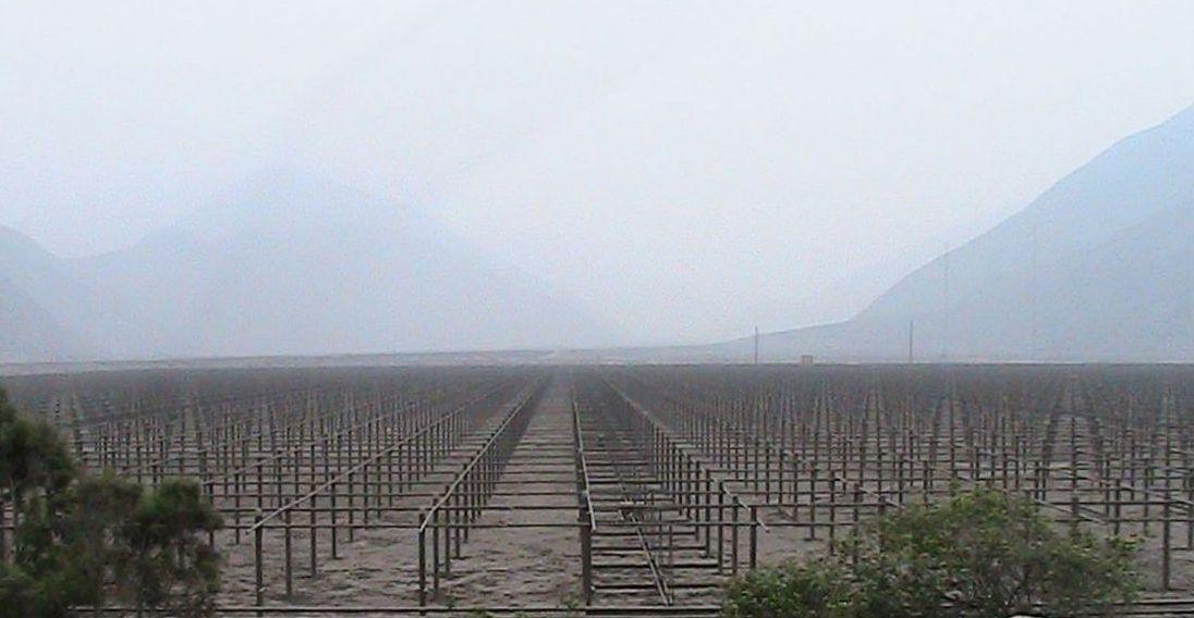 Jicamarca radar vineyard cropped