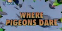Where Pigeons Dare