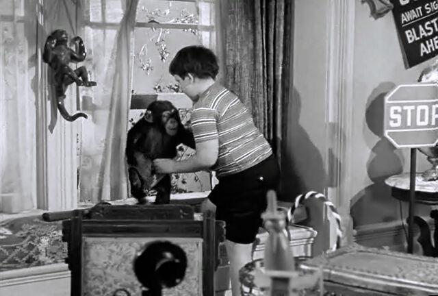 File:Af pugsleys room chimp.jpg