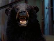 Afn bear3 policy