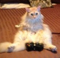 File:Xbox cat.PNG