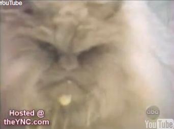 File:Souper cat.PNG