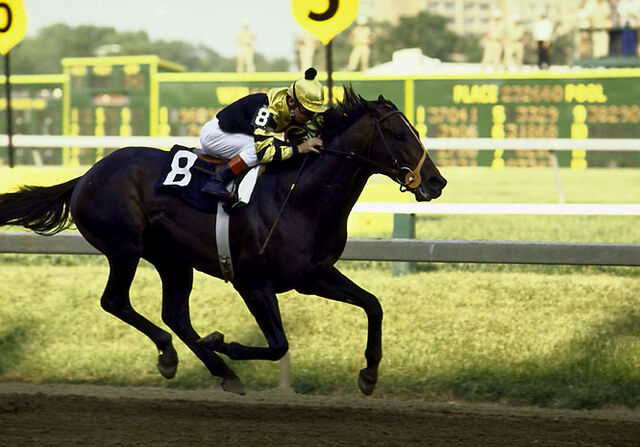 File:Seattle-Slew.jpg