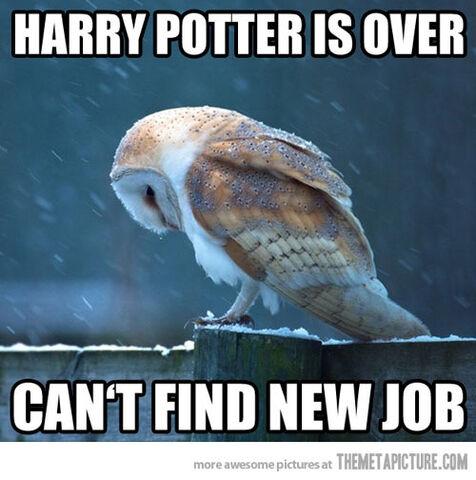 File:Funny-Harry-Potter-owl-sad.jpg