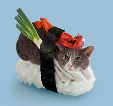 File:Cattt.jpg