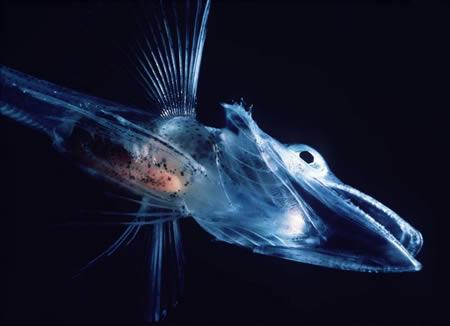 File:A357 fish.jpg