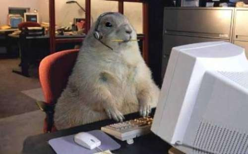File:Funny-groundhog-day-6.jpg