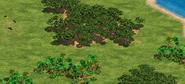 Madagascarlandscape2
