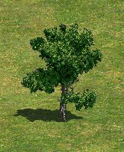 TreeA