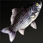 File:Flatfish.png