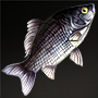 File:Yellow Porgy.png
