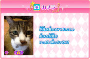 Aisuma app 11