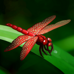 Red DFly Crop