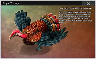 Royal Turkey b20718
