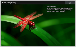 Red DFly