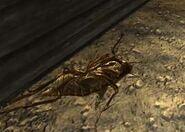 Buzz dead
