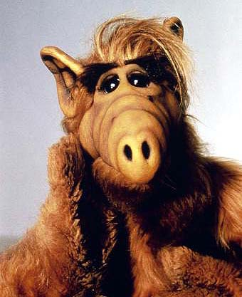 Alf wikia alf fandom powered by wikia for Ver serie life